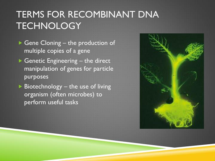 Terms for recombinant DNA technology
