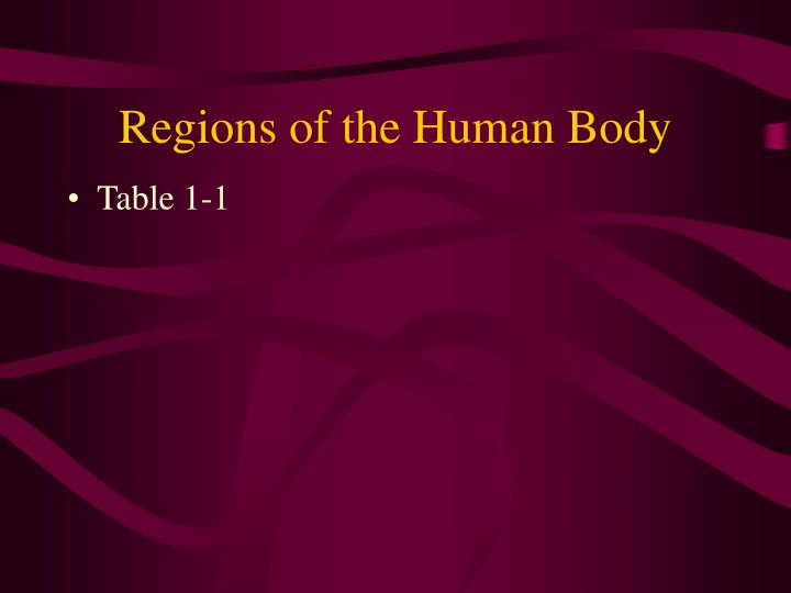 Regions of the Human Body
