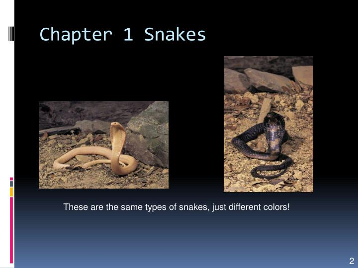 Chapter 1 Snakes