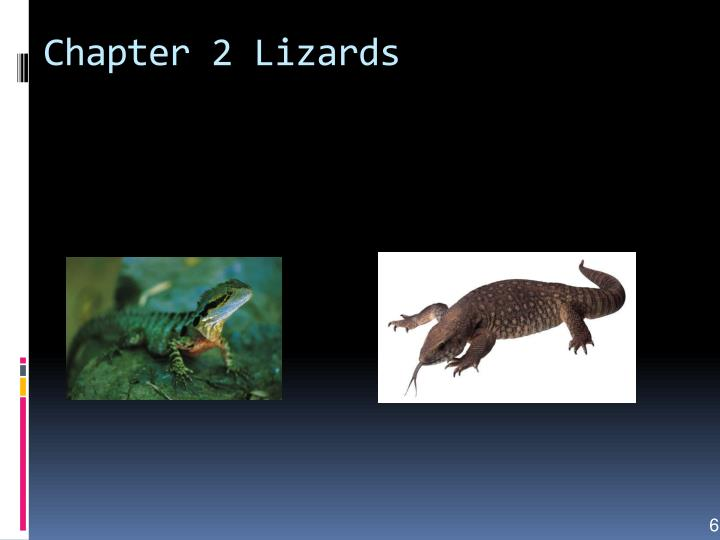 Chapter 2 Lizards