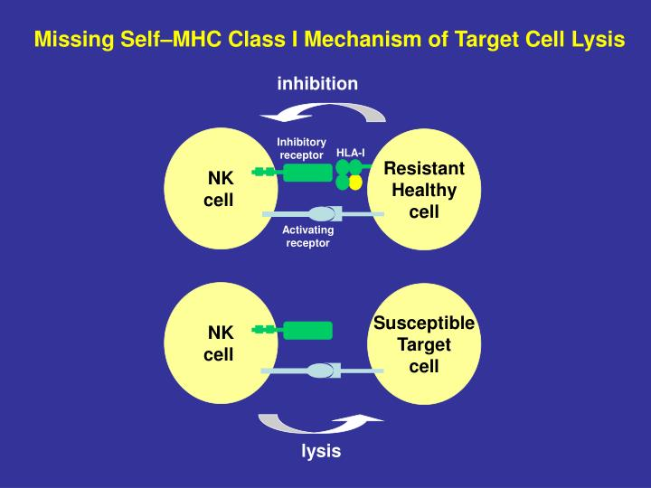 Missing Self–MHC Class I Mechanism of Target Cell Lysis