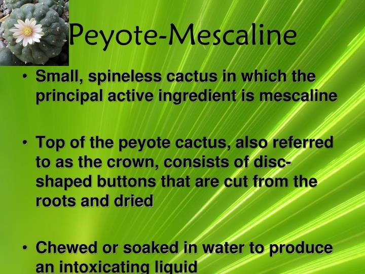 Peyote-Mescaline