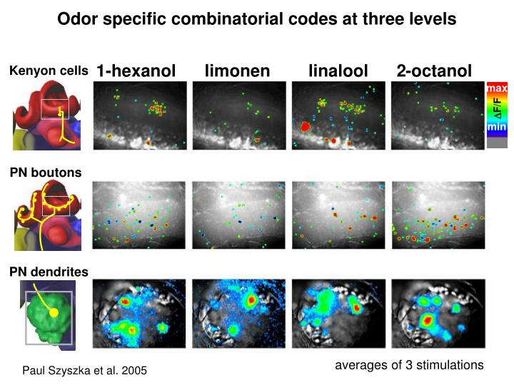 Odor specific combinatorial codes at three levels