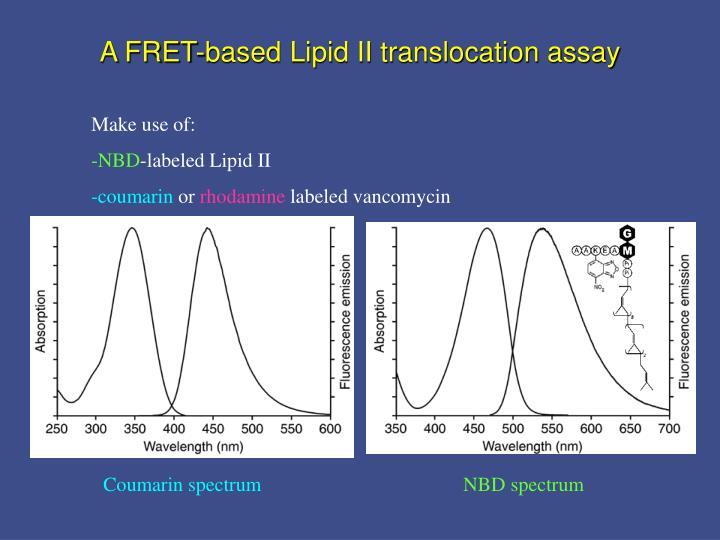 A FRET-based Lipid II translocation assay