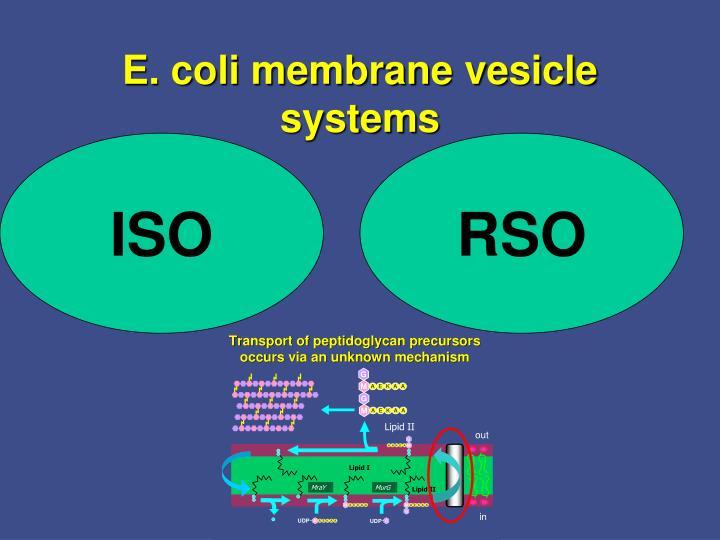 E. coli membrane vesicle systems