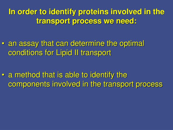 an assay that can determine the optimal conditions for Lipid II transport