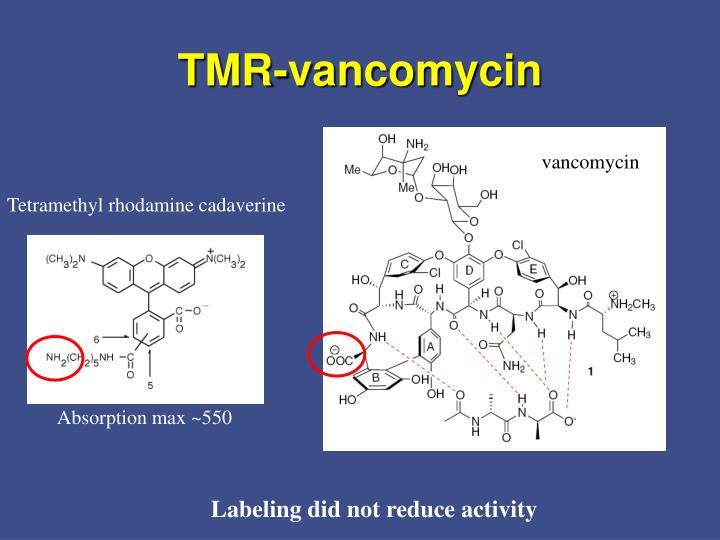TMR-vancomycin