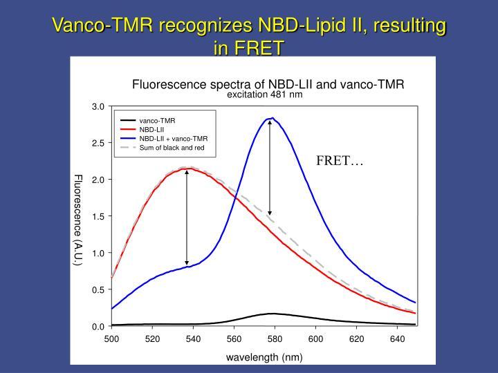 Vanco-TMR recognizes NBD-Lipid II, resulting in FRET
