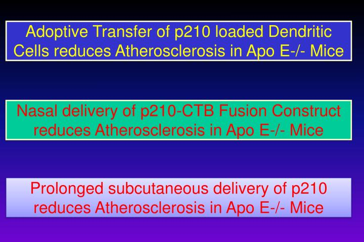 Adoptive Transfer of p210 loaded Dendritic Cells reduces Atherosclerosis in Apo E-/- Mice