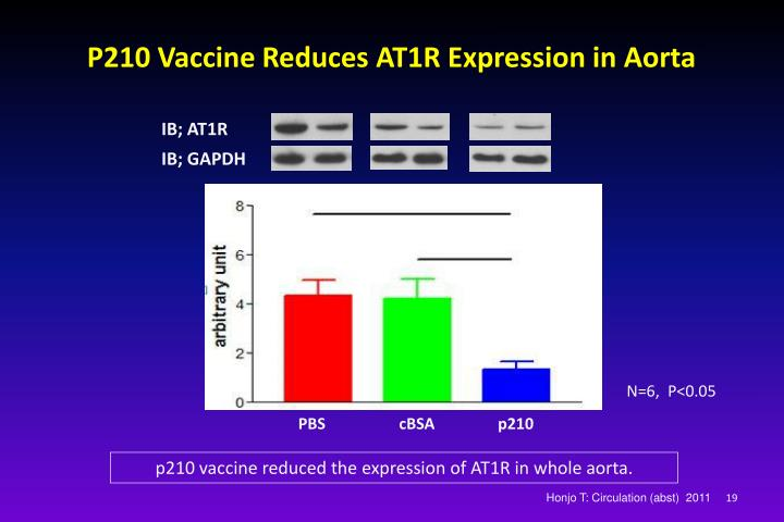 P210 Vaccine Reduces AT1R Expression in Aorta