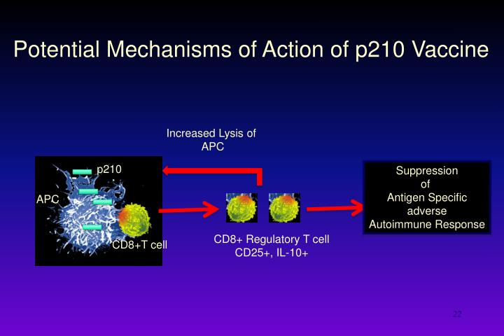Potential Mechanisms of Action of p210 Vaccine