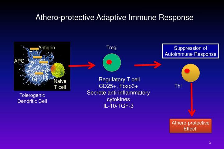 Athero-protective Adaptive Immune Response