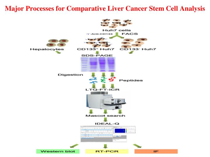 Major Processes for Comparative Liver Cancer Stem Cell Analysis