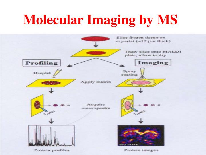 Molecular Imaging by MS