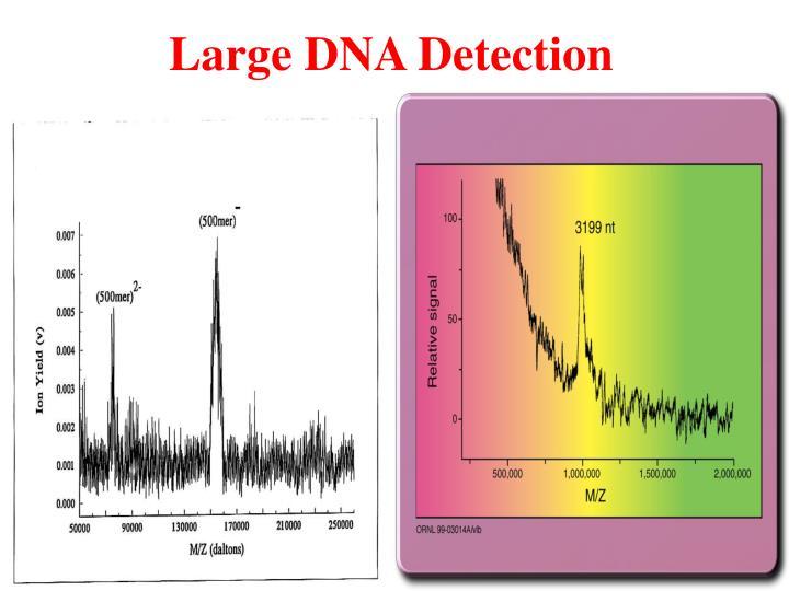 Large DNA Detection