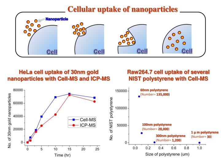 Cellular uptake of nanoparticles