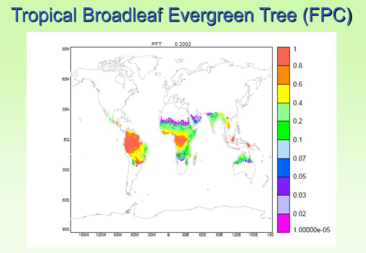 Tropical Broadleaf Evergreen Tree (FPC)