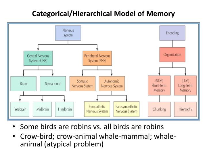 Categorical/Hierarchical Model of Memory