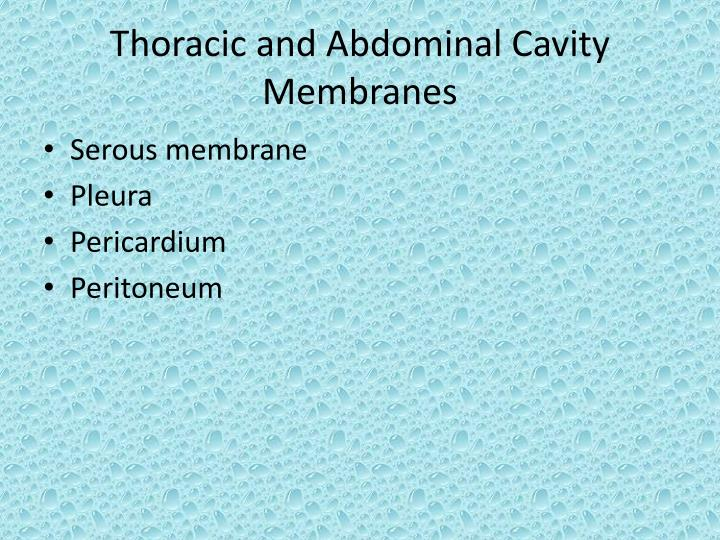 Thoracic and Abdominal Cavity Membranes