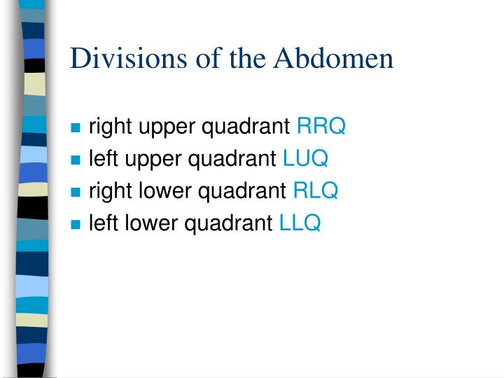 Divisions of the Abdomen