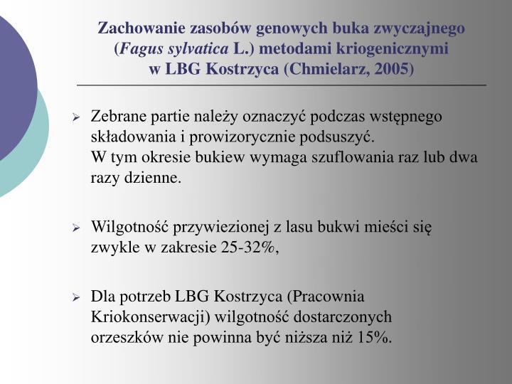 Zachowanie zasobów genowych buka zwyczajnego (