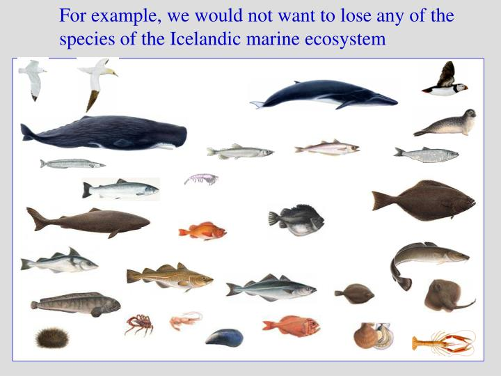 For example, we would not want to lose any of the species of the Icelandic marine ecosystem