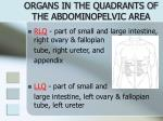 organs in the quadrants of the abdominopelvic area1