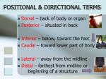 positional directional terms
