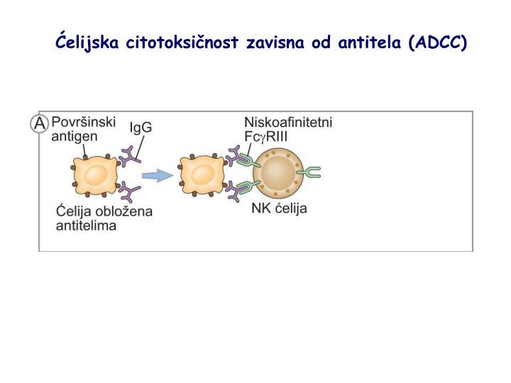 Ćelijska citotoksičnost zavisna od antitela (ADCC)