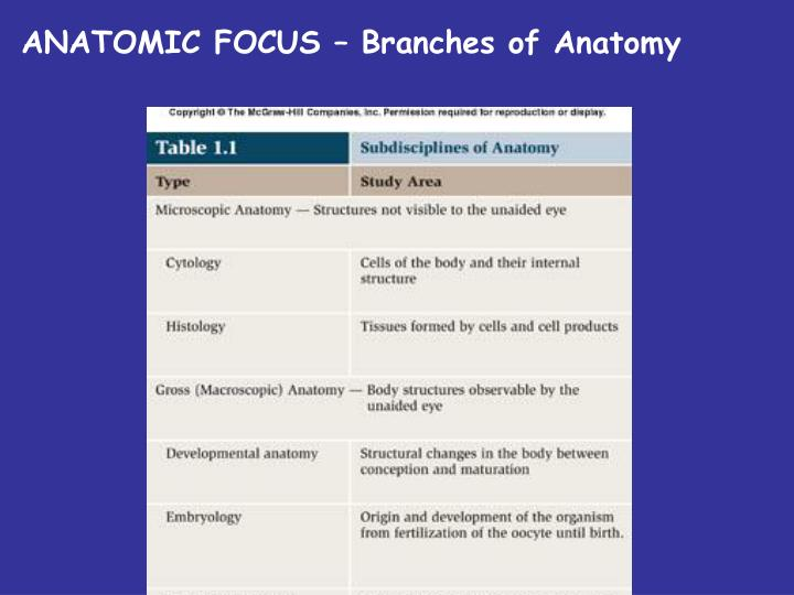 ANATOMIC FOCUS – Branches of Anatomy
