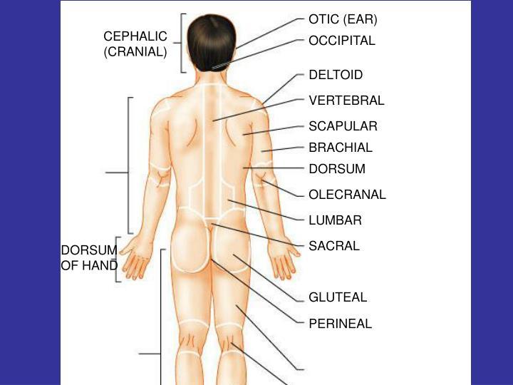 OTIC (EAR)