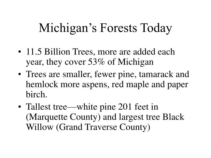 Michigan's Forests Today