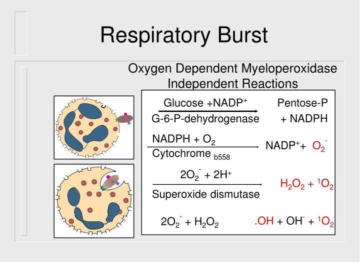 Glucose +NADP