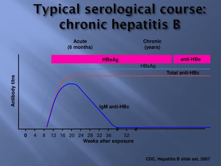 Typical serological course: