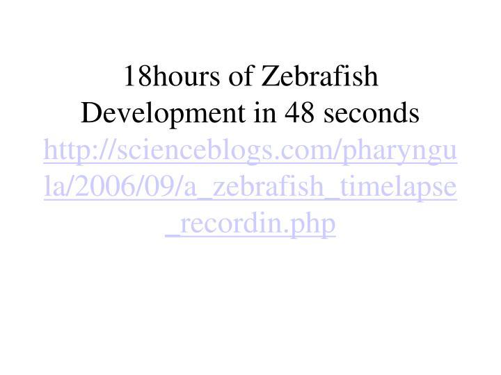 18hours of Zebrafish Development in 48 seconds
