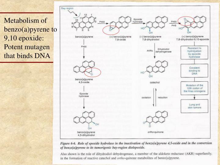 Metabolism of benzo(a)pyrene to 9,10 epoxide: