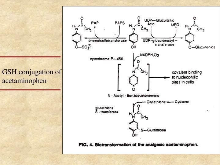 GSH conjugation of acetaminophen