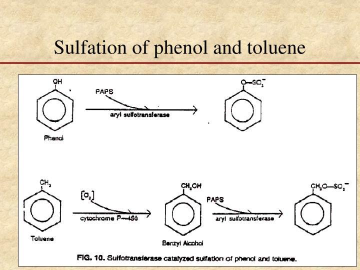 Sulfation of phenol and toluene