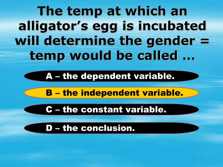 The temp at which an alligator's egg is incubated will determine the gender = temp would be called …