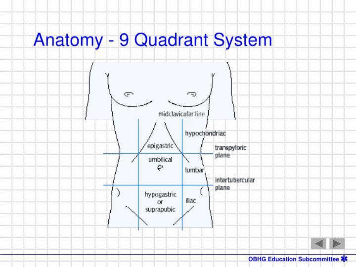 Anatomy - 9 Quadrant System
