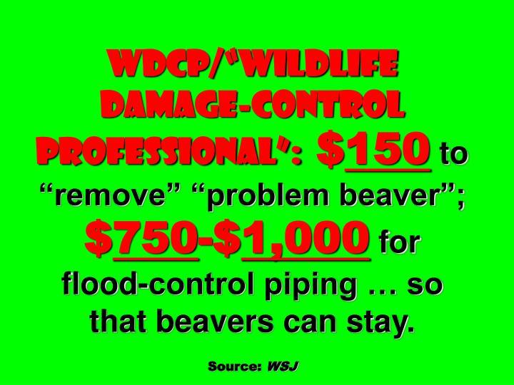 "wdcp/""Wildlife  Damage-control Professional"":"