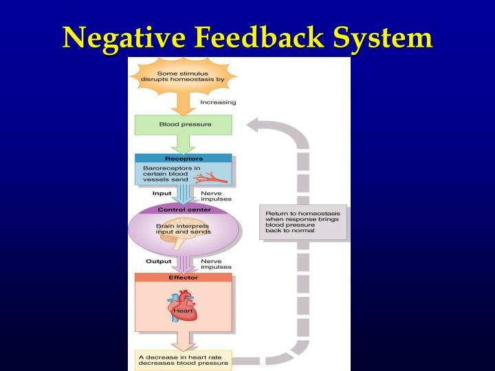 Negative Feedback System