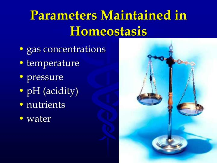 Parameters Maintained in Homeostasis