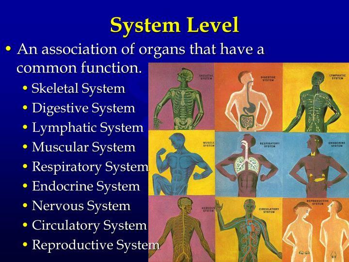 System Level