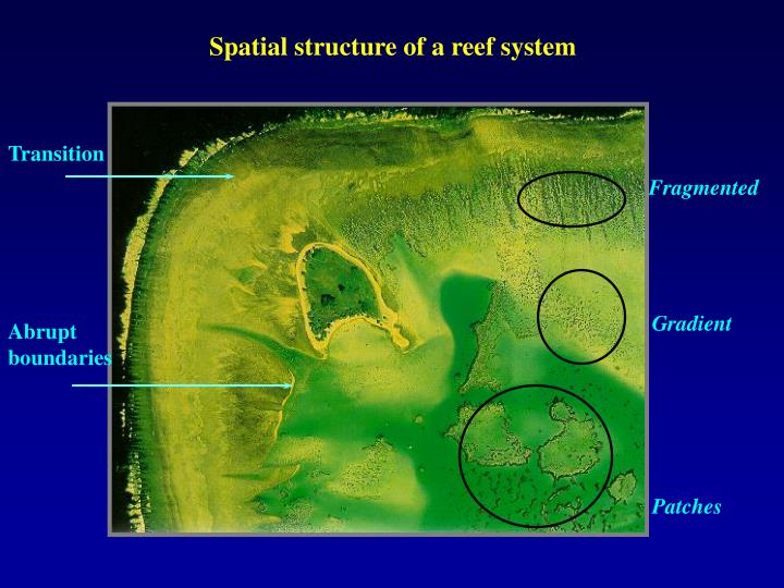Spatial structure of a reef system