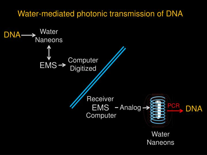 Water-mediated photonic transmission of DNA