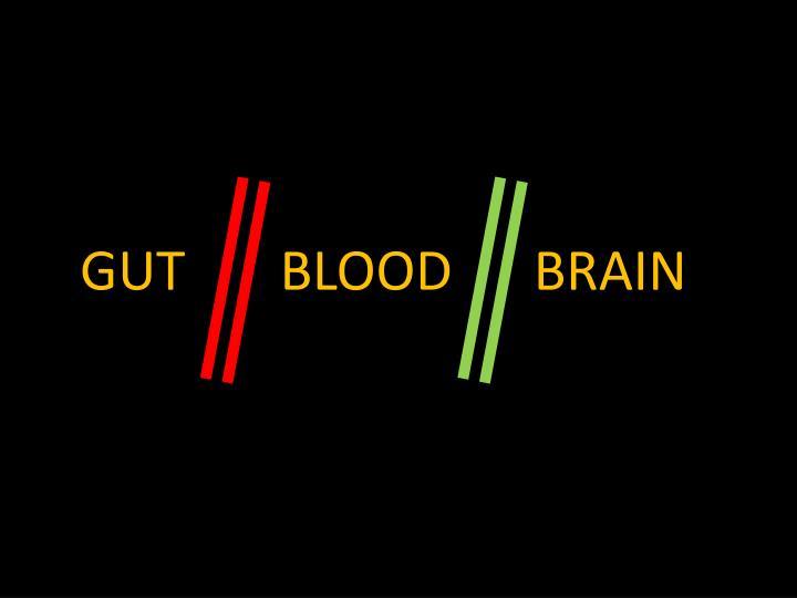 GUT       BLOOD      BRAIN