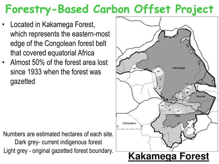 Forestry-Based Carbon Offset Project