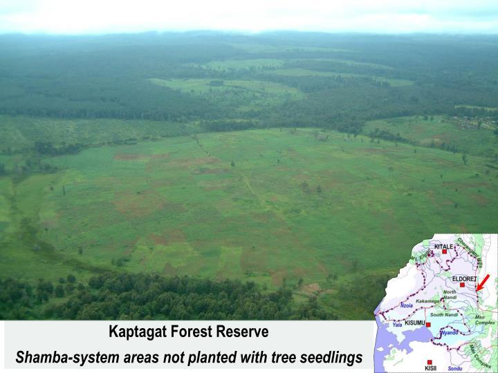 Kaptagat Forest Reserve