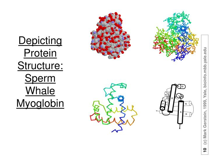 Depicting Protein Structure: